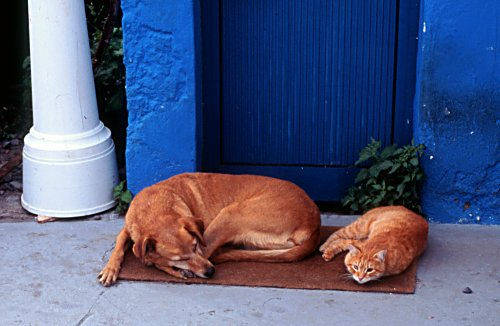a cat and a dog sleeping, Madeira, Foto: L. Bobke