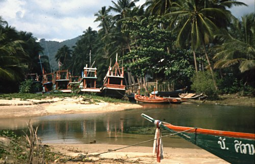 Fishing boats under palm trees, Koh Samui, Thailand